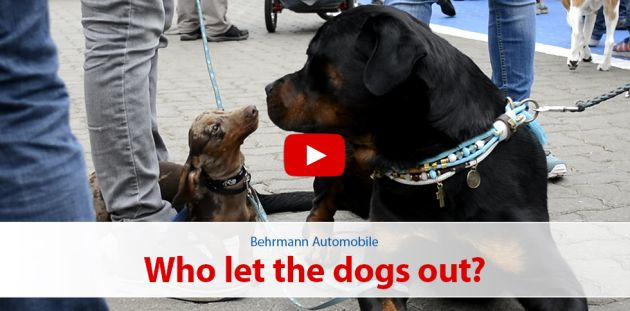 Who let the dogs out? - 9. Norderstedter Hundemesse